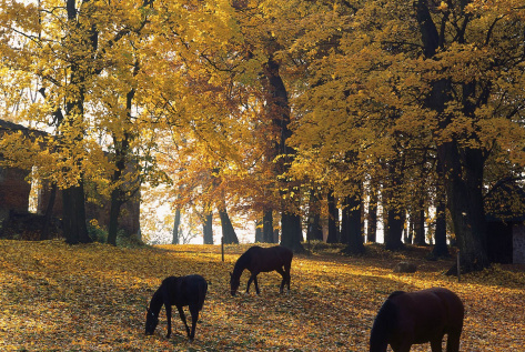 Autumn in Świętokrzyskie