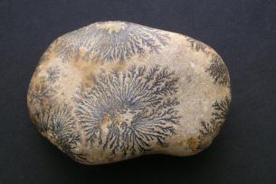 Dendryty (pseudo roślinki) manganowe na otoczaku wapiennym