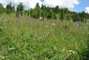 Rezerwat Murway Dobromireskie
