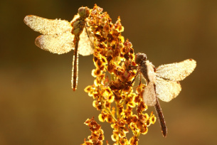 Świętokrzyska fauna i flora