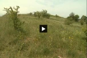 Rezerwat Przęślin (realizacja: Agnieszka Markiton)