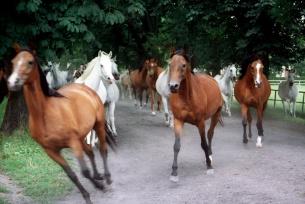 Stadnina koni w Michałowie (realizacja: Edyta Ruszkowska)