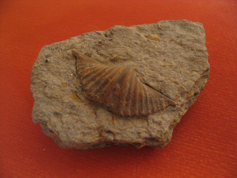 2 główne sposoby datowania skamielin
