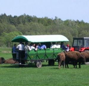 Mini ZOO i Safari Bizon w Zespole Pałacowym w Kurozwękach