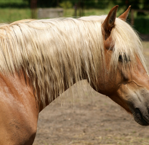 Ośrodek jazdy konnej i hipoterapii HIPOLAND