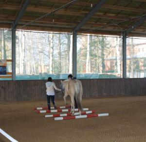 Ośrodek szkoleniowo-jeździecki LUCKY 5 RANCH