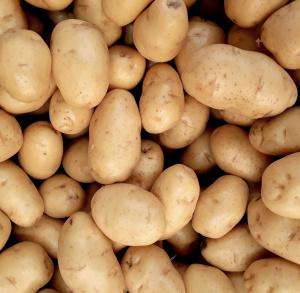 """""""W dzień św. Tekli ziemniaki będziem piekli"""" w Dębnie"""