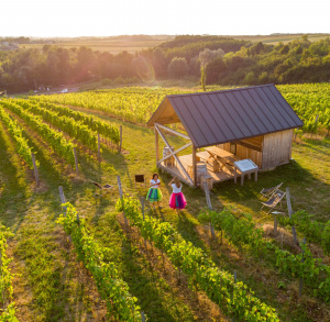 Świętokrzyskie śliwki, wino i historia - podróżuj z WOWLAND