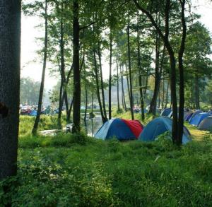 Pole namiotowe i kempingowe w Bałtowie