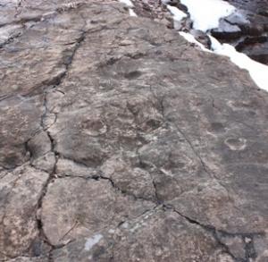 Tropy tetrapoda – kamieniołom Zachełmie w Zagnańsku