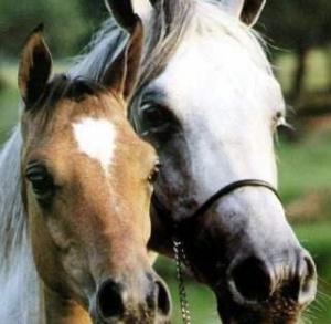 Ludowy Klub Jeździecki PONIDZIE