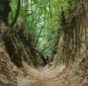 Sandomierskie Landscapes (1)