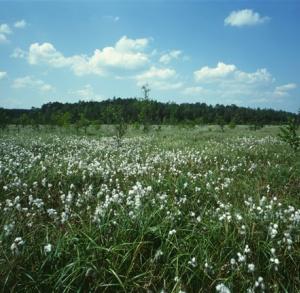 Exploring the Beauty of Świętokrzyski National Park - On the Chełmowa Hill