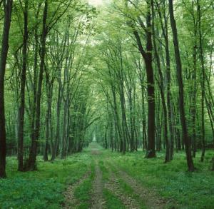 The Fern Flower Route of Świętokrzyskie