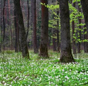 The Cisowsko-Orłowiński Landscape Park – Power of Nature