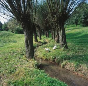The Szaniecki Landscape Park