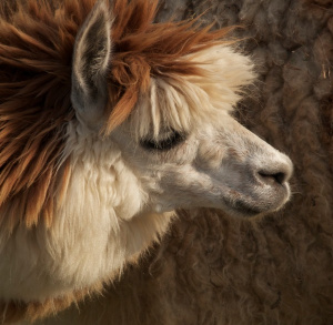 Zoo in Bałtów