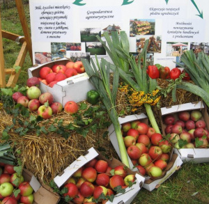 European Apple-Harvesting Festival at Obrazów