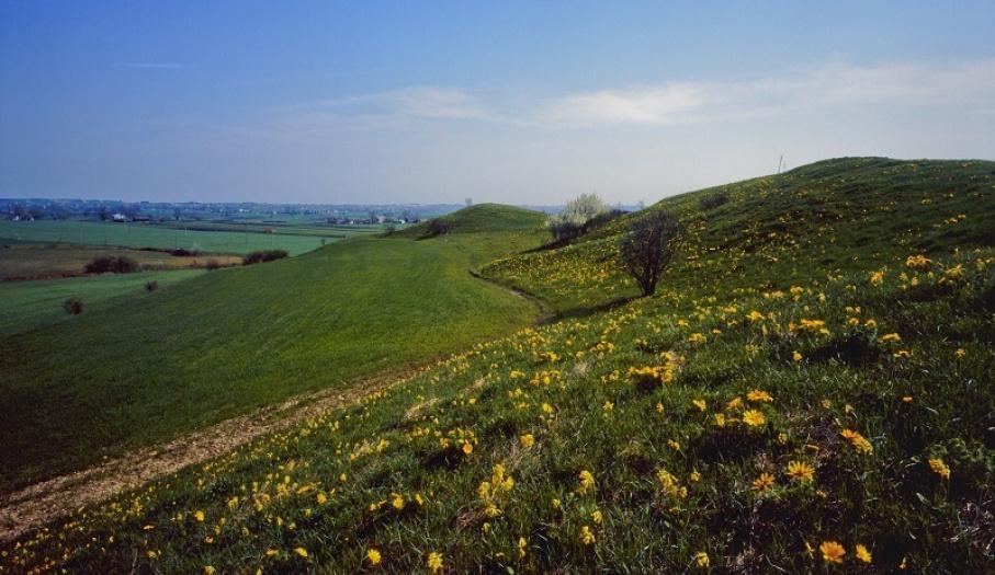 Winiary Zagojskie Reserve in Nadnidziański Landscape Park