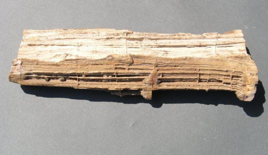 Drewno skrzemieniałe