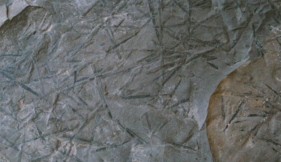 Łupki graptolitowe