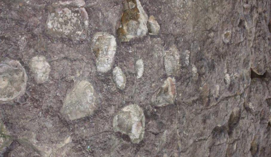 Tropy jurajskich dinozaurów