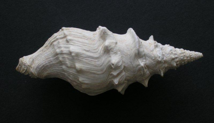 Owoce morza mioceńskiego