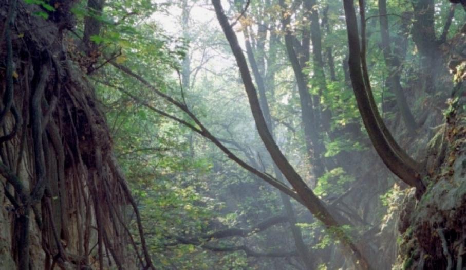Wąwóz Królowej Jadwigi