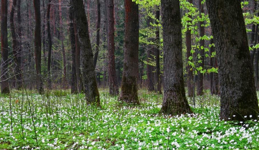 Cisowsko-Orłowińśki Landscape Park