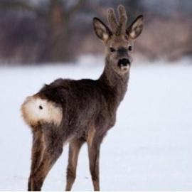 VII Zimowy Rajd Tropami Dzikich Zwierząt