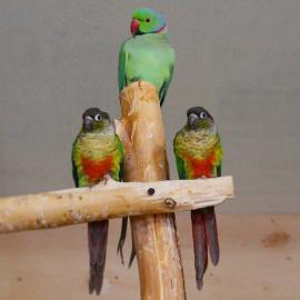 Konkurs z papużkami