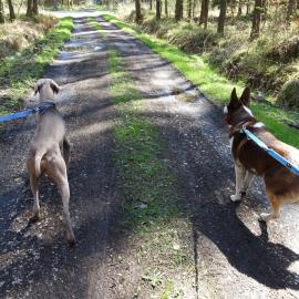 Z psem w świetokrzyskim lesie
